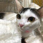保護猫 里親会へ参加 大阪市都島区【Cat Socionさん主催】