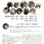 保護猫 里親会のご案内 3月17日 大阪市都島区【catsocionさん主催】