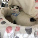6月3日 保護猫 里親会へ参加予定 大阪市都島区【CatSocionさん主催】