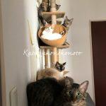 猫の爪で壁紙ボロボロ、DIYで壁をリメイク!〜キャットウォーク取付【実践記①】〜